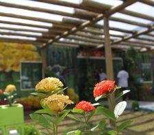 Viveiro Municipal Tomoe Uemura é inaugurado no Jardim Imperador
