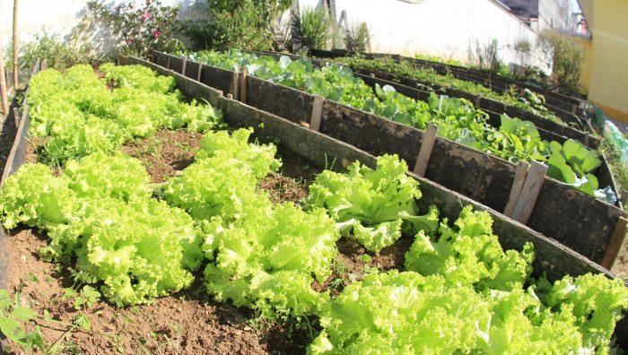 Prefeitura de Suzano implementa hortas educativas no Centro de Convivência