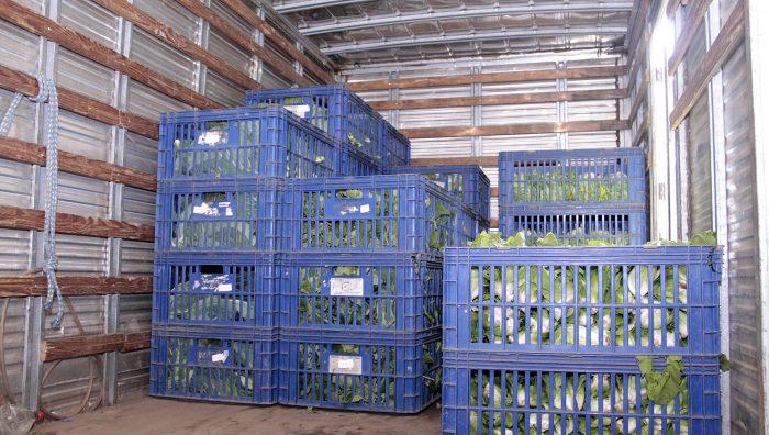 Banco de Alimentos distribui 3,7 toneladas de hortaliças para entidades em dois meses