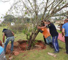Árvores são plantadas em três pontos de Suzano