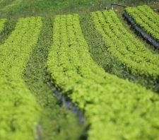 Suzano terá nova edição da Semana da Agricultura Orgânica Familiar