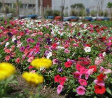 Viveiro Municipal recebe 12 mil visitantes e cultiva 20 mil mudas em 2018