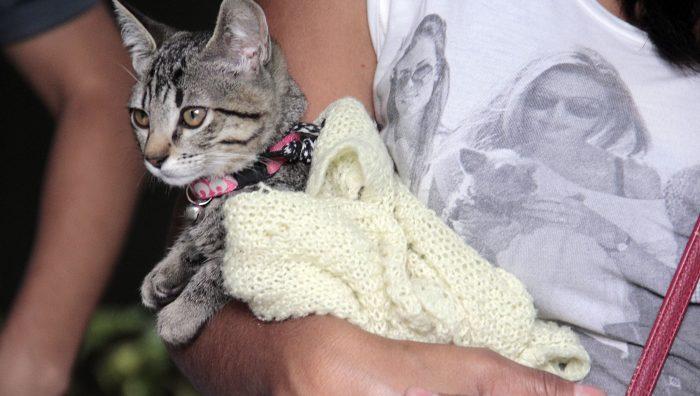 Campanha realiza castração de 110 animais em Suzano