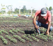 Viveiro Municipal cultiva mais de 10 mil mudas de flores para doação
