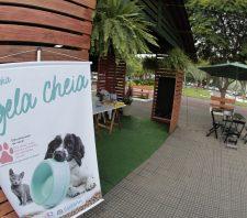 Fundo Social e Viveiro Municipal divulgam ações na Praça Cidade das Flores