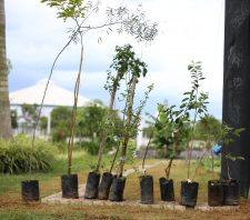 Viveiro Municipal doa mudas para Arborização Participativa