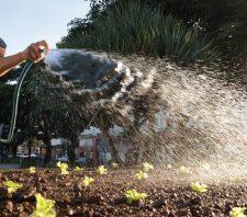 Público da melhor idade cria horta suspensa no Centro de Convivência