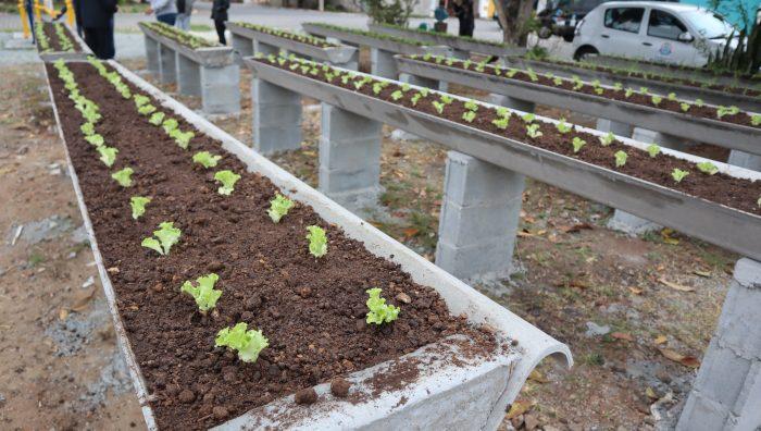 Prefeito inaugura 'Horta Comunitária Elevada' no Parque Maria Helena