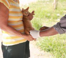 Campanha de Vacinação Antirrábica tem início no dia 12 de agosto