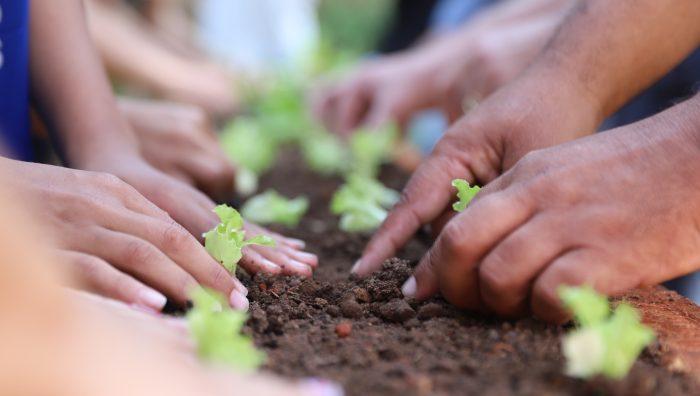 Horta Comunitária é inaugurada no Boa Vista