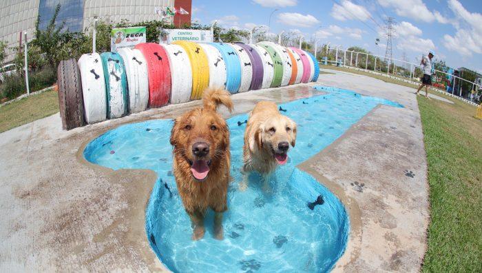 Suzano oferece ambiente gratuito de lazer para cães