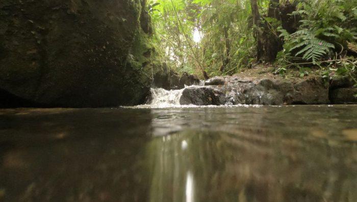 Suzano participará de debate online sobre produção de água