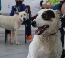 Zoonoses e Meio Ambiente realizam primeiro mutirão de castração e microchipagem do ano