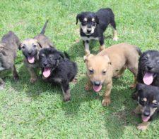 Projeto 'Baby, me leva!' tem mais sete cães para adoção