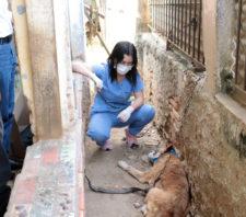 Meio Ambiente resgata dois cães no Jardim Imperador