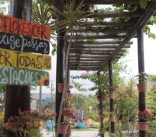 Parque Municipal Max Feffer retoma as atividades neste domingo