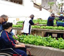 Horta suspensa do Centro de Convivência beneficia mais de cem famílias