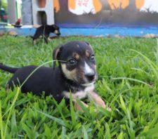 Setor de Bem-Estar Animal promove evento de adoção responsável